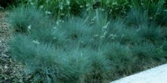 Wholesale Grass Plugs & Liners